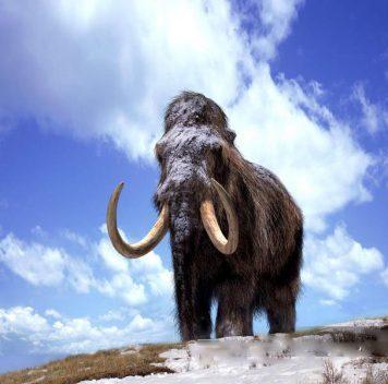 Последние мамонты умерли от жажды наострове Святого Павла