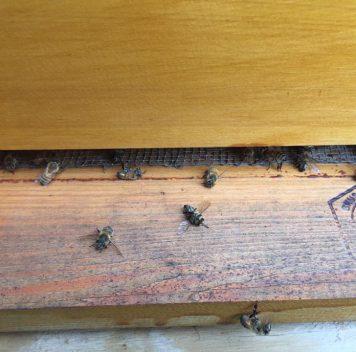 В процессе борьбы сэпидемией Зика вЮжной Каролине случайно убили миллионы пчёл