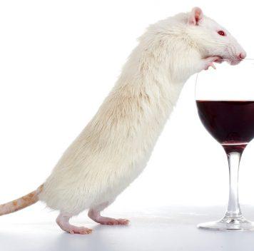 Учёные победили алкогольную зависимость— укрыс