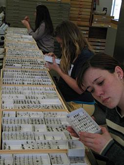 Студенты занимаются водном из помещений американской Национальной коллекции насекомых-опылителей