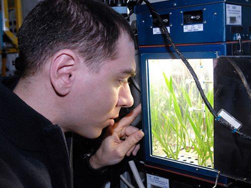 Космонавт Сергей Волков наблюдает за растениями втеплице «Лада-1» наМеждународной космической станции, 2011 год.