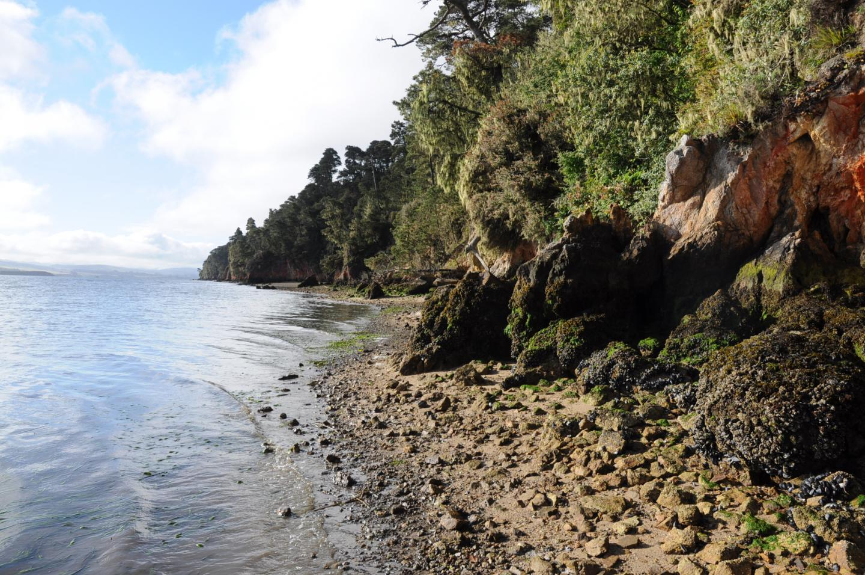 Место обитания как устриц, так иих врагов вкалифорнийском заливе Томалес.