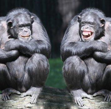 Человекообразные приматы способны понять, что кто-то неправ
