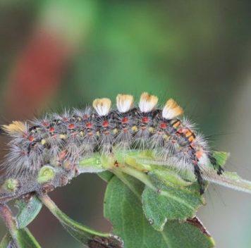 Биологическое разнообразие— природный пестицид