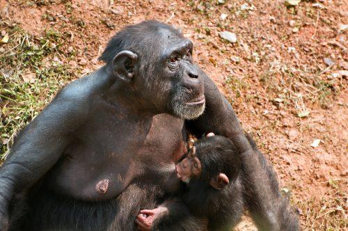 Естественное материнство