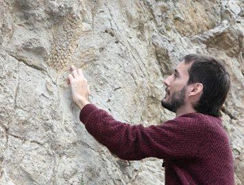 Слепок кожи одного из последних динозавров Европы