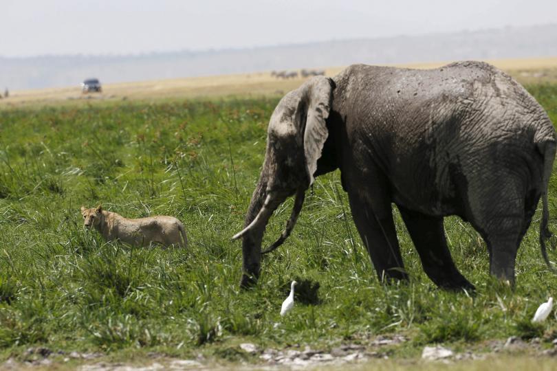 Дикие животные под охраной. Национальный парк вКении.