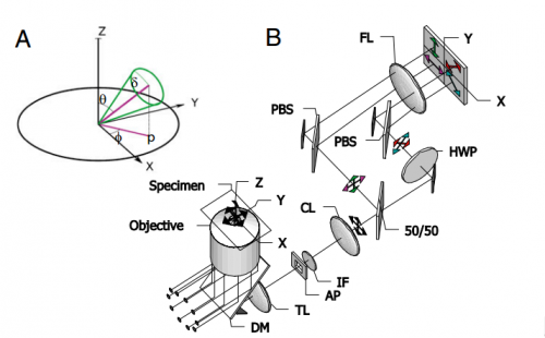 Схематическое строение микроскопа.