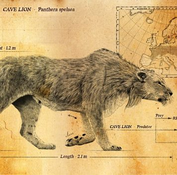 Люди верхнего палеолита охотились напещерных львов ради шкур