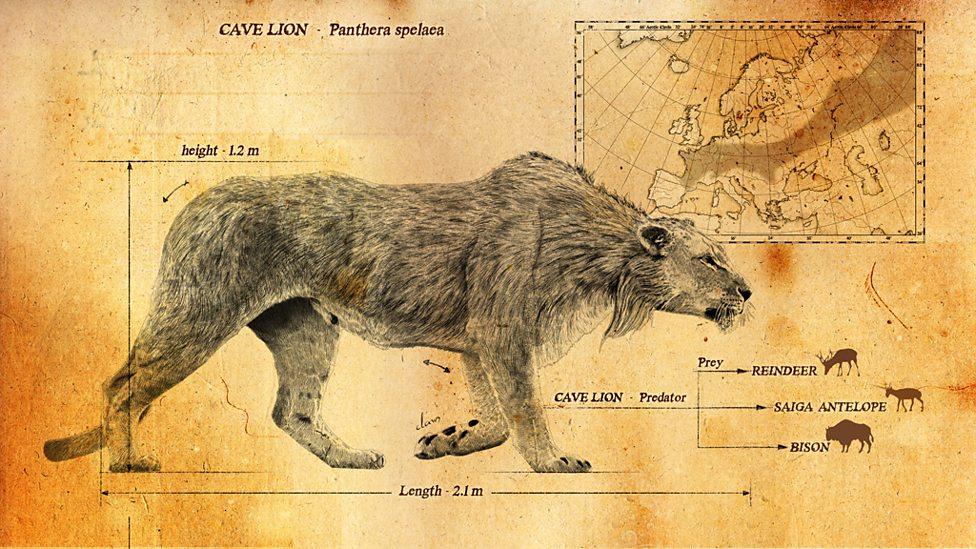 Ареал пещерного льва простирался от западной Европы до Чукотки.
