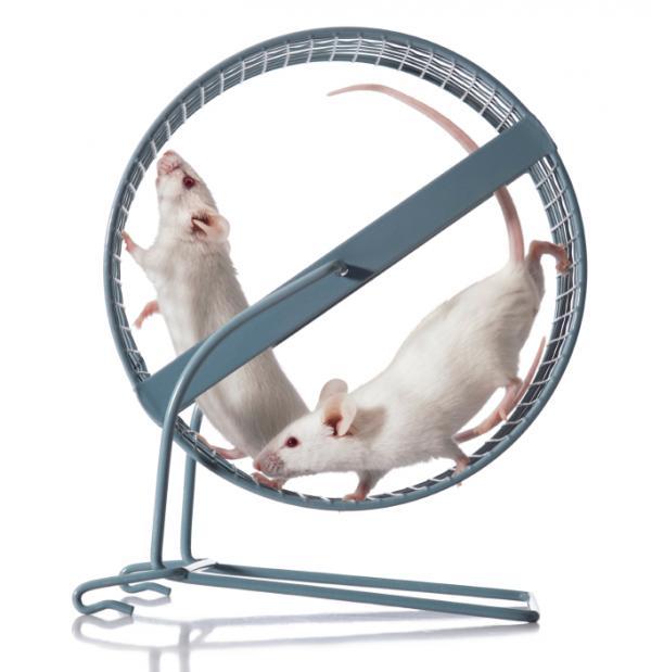 Мыши-бегуны нетолько приобрели здоровый аппетит исносное чувство равновесия, но ижили дольше— неплохой побочный эффект занятий спортом.