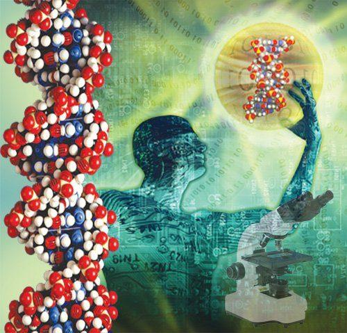 ДНК упакована очень плотно