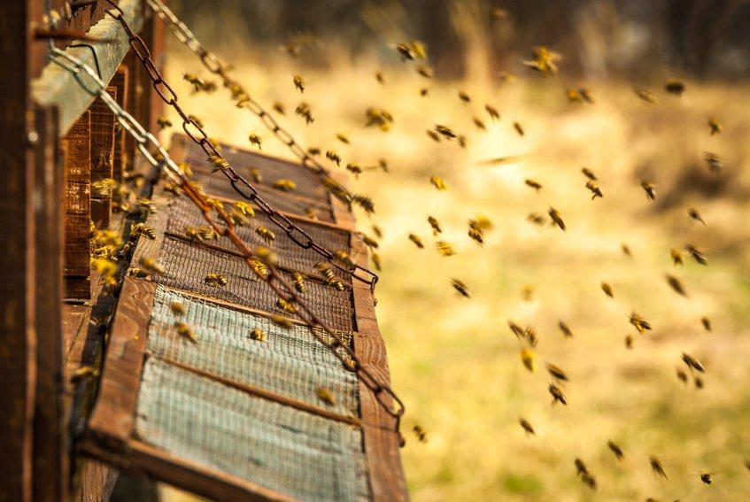 Пчёлы. Какие только опасности неподстерегают их!