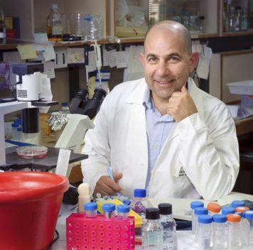 Изучены механизмы, связанные спревращением В-лимфоцитов враковые клетки