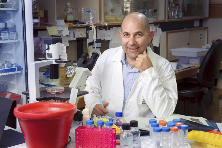 Профессор Дорон Меламед, руководитель работы по изучению биохимических сигнальных путей вперерождённых В-лимфоцитах.