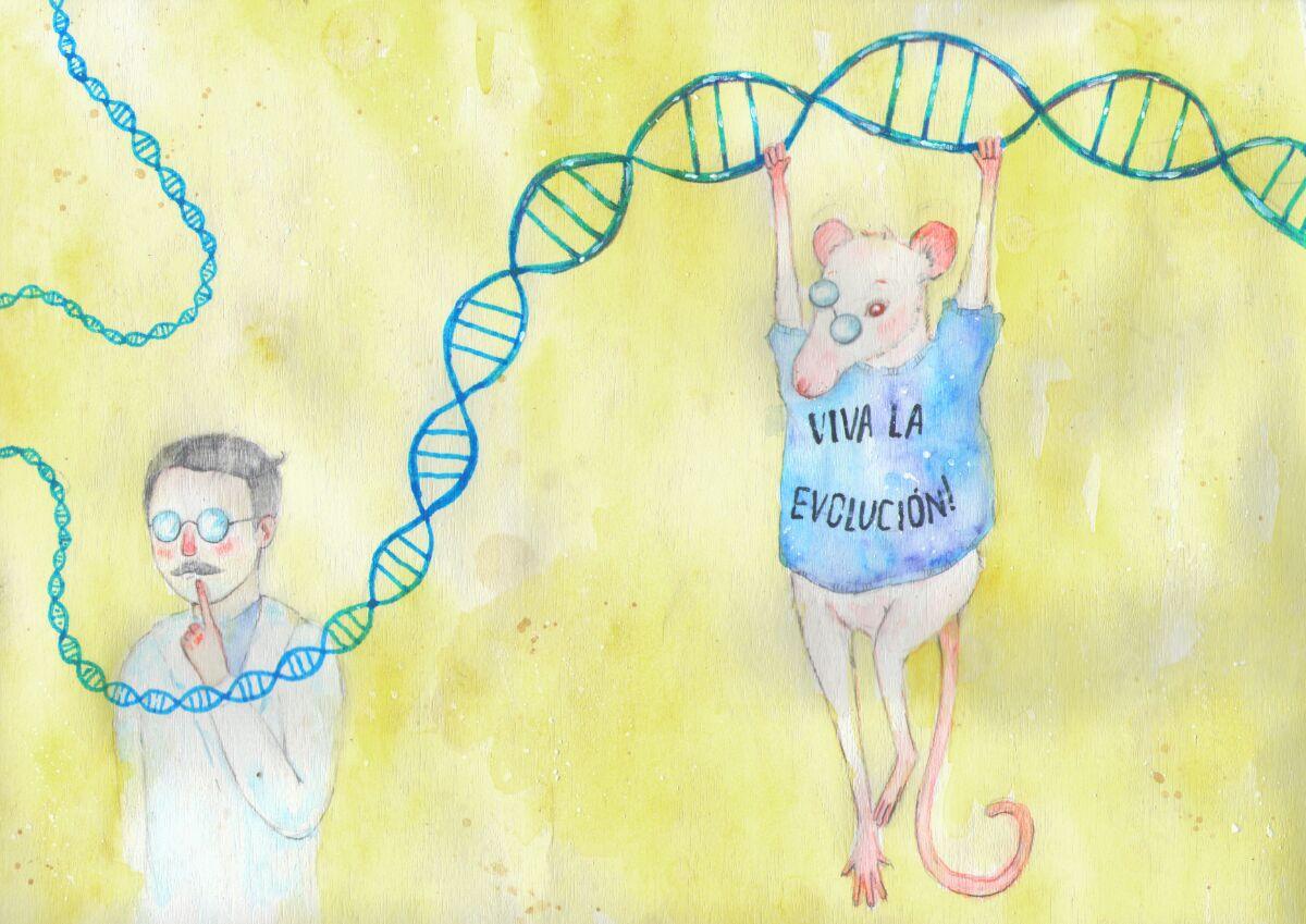 Учёные исправили геном вклетках пациентов ссерповидноклеточной анемией ивживили их вмышь. Через 16 недель вживлённые клетки всё ещё нормально функционировали вмышином костном мозге. / Рисунок— Эльза Коркиайнен.