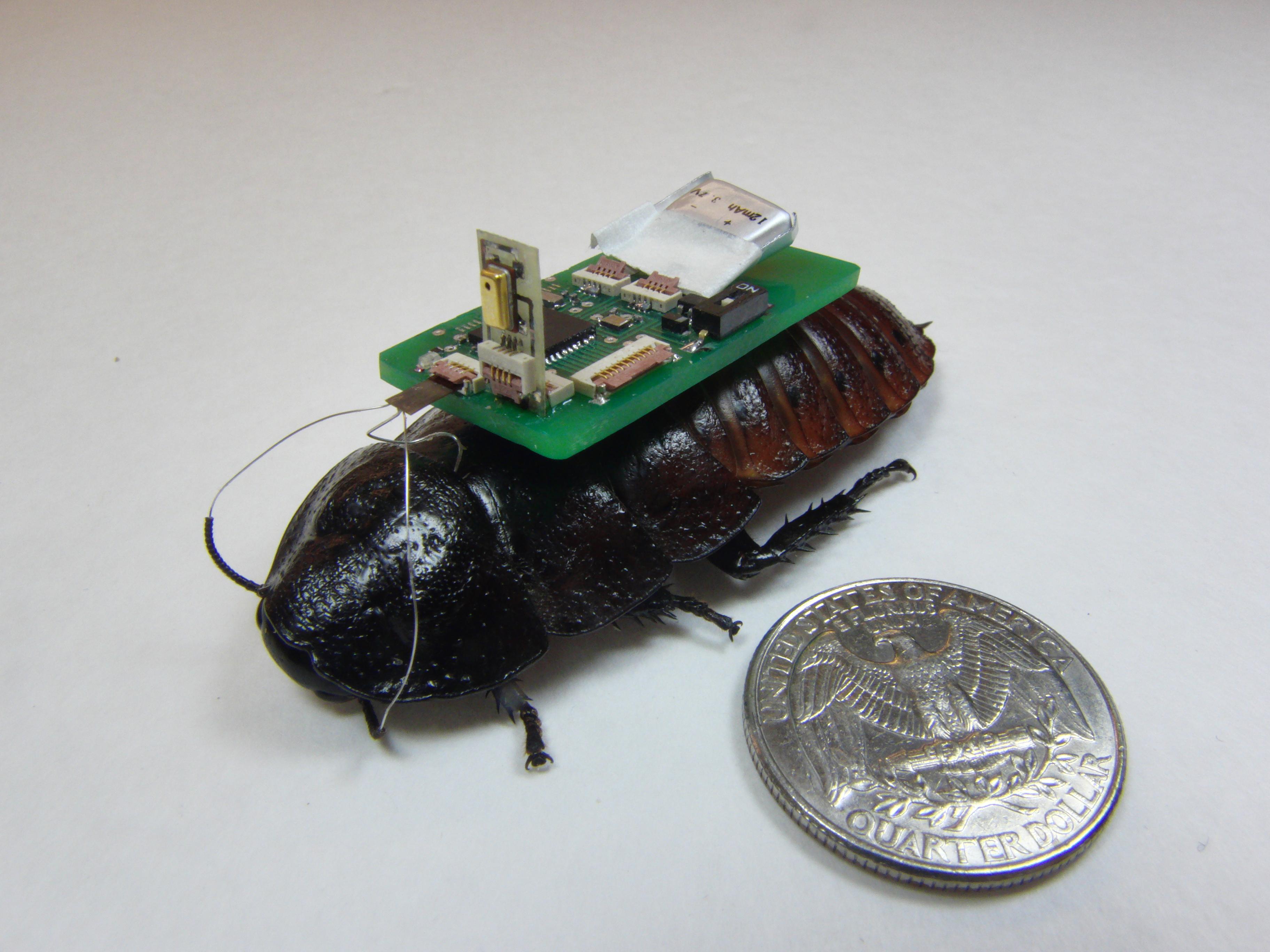 Ранее учёные создали биороботов-тараканов.