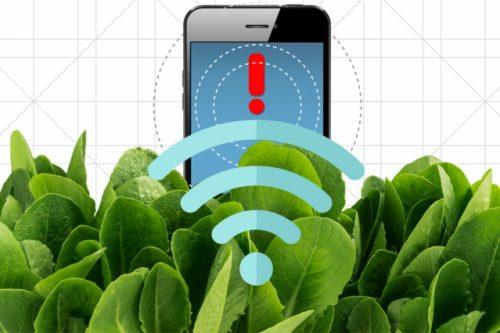 Зарегистрировать сигнал «умного» шпината можно спомощью камеры, подключённой ккарманному компьютеру или обыкновенного смартфона, из которого удалили ИК-фильтр. Иллюстрация: Кристин Данилофф, МТИ.