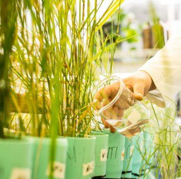 Траву научили перерабатывать гексоген