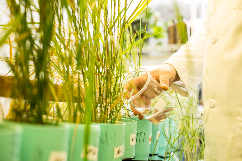 Новые травы военным придутся очень кстати, ведь стоимость очистки полигонов от загрязняющих веществ оценивается в16— 165 миллиардов долларов.