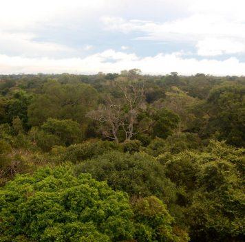Вырубка лесов наодном конце Земли меняет климат надругом
