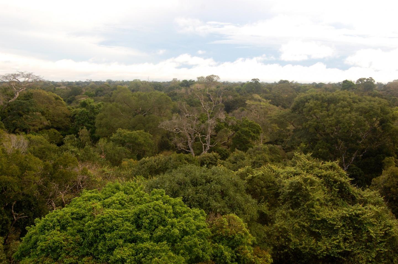 Дождевые леса Амазонии.