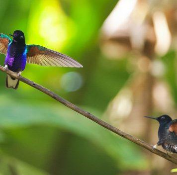 Видов, которым грозит вымирание, может оказаться больше, чем мы думаем