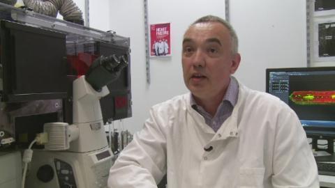 Профессор Эндрю Траффорд (Andrew Trafford) из Кардиологического института Манчестерского университета