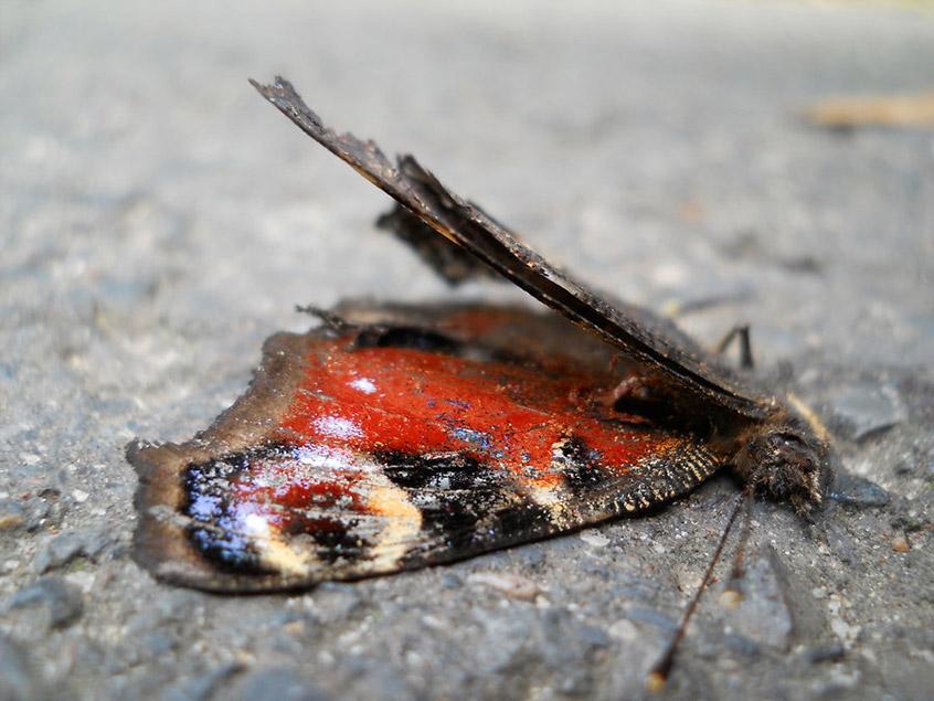Глобальное потепление губит бабочек. Или негубит