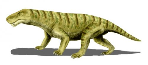 Один из видов горгонопсов (реконструкция)