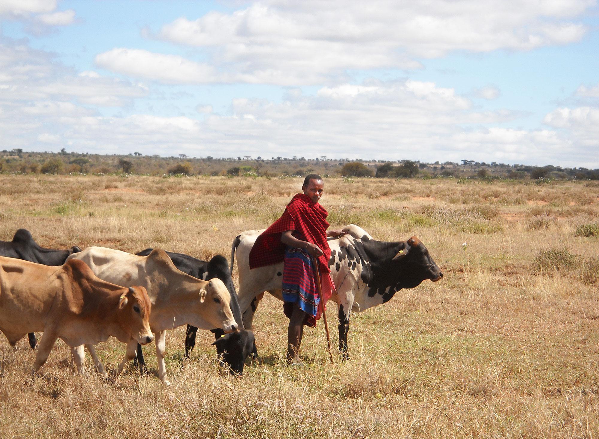 Представитель коренного народа Масаи, живущего всаванне наюге Кении.