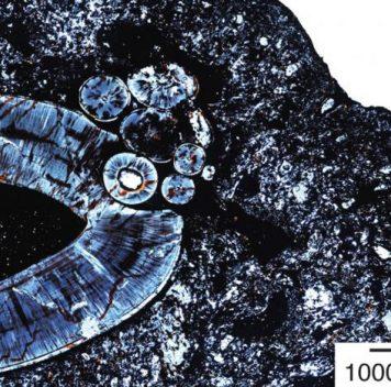 В ископаемой челюсти обнаружена древняя опухоль