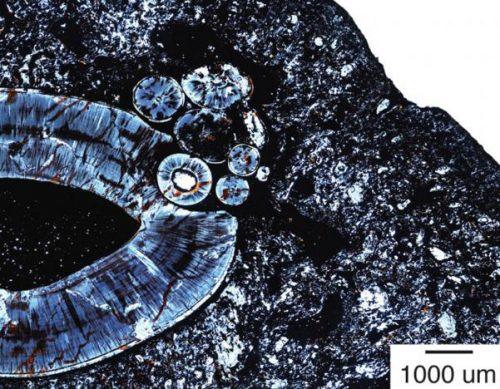Гистологический препарат челюсти ископаемого животного.