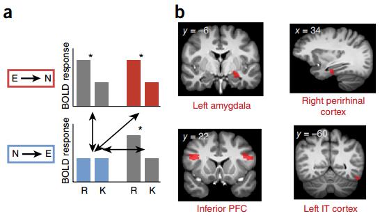 Активность мозга при разном порядке предъявления изображений.