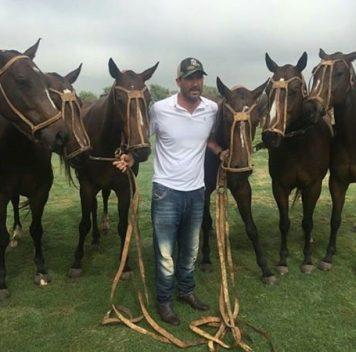 Шесть клонированных лошадей помогли выиграть чемпионат по поло