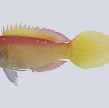 Калифорнийская академия наук описала в2016 году 133 новых вида