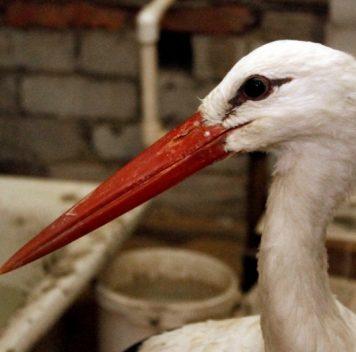 В Воронежском зоопарке уничтожат всех птиц из-за вспышки птичьего гриппа