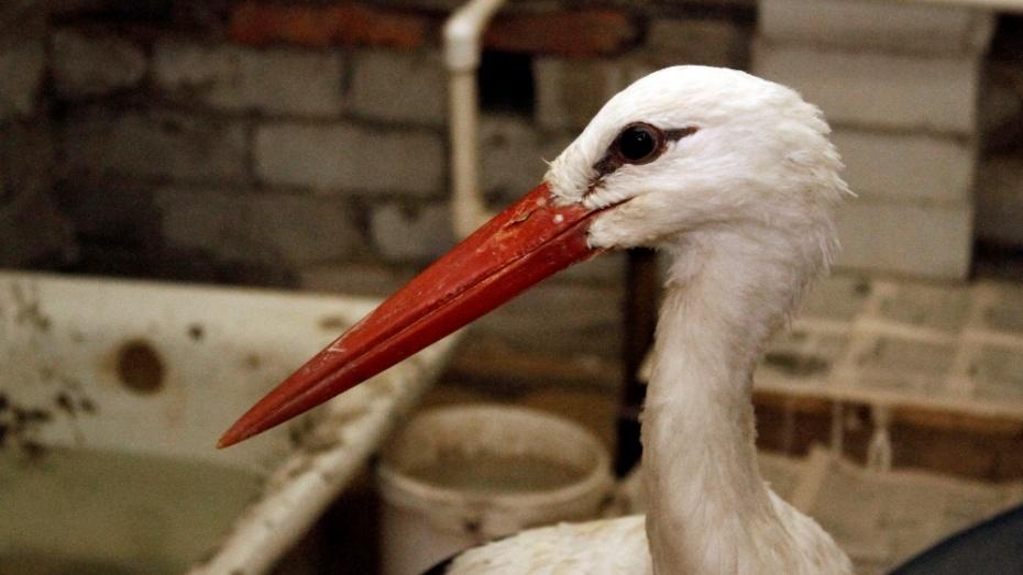 Вколлекции Воронежского зоопарка насчитывалось 159 экземпляров птиц 44 различных видов.