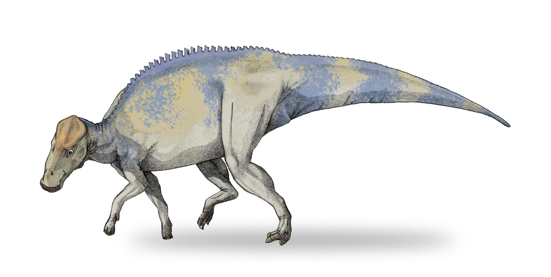 Реконструкция брахилофозавра