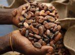Производители шоколадок Cudbury и Alpen Gold хотят точно знать, какой урожай какао-бобов в этом году соберут фермеры разных стран. Для этого им нужна помощь математиков.