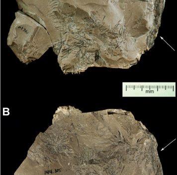 Неандертальцы— охотники за камнями