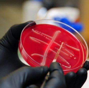 В Китае широко распространились бактерии, устойчивые кколистину