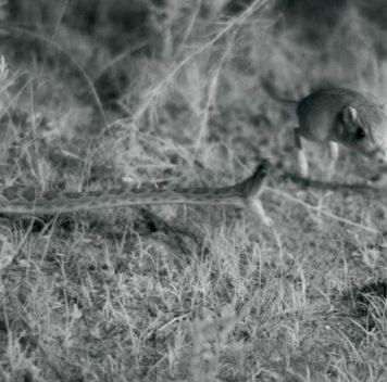 Бросок змеи врежиме замедленной съёмки ив3D