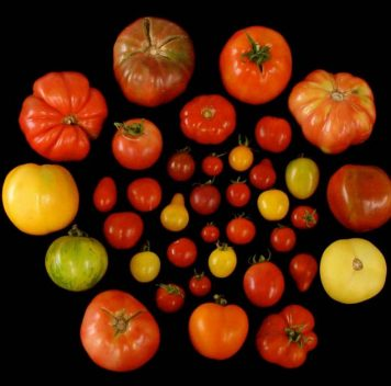Make помидоры вкусными again!