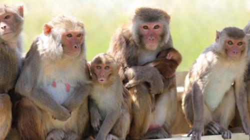 В ходе испытаний ни один из самцов, получивших инъекцию «Вазалгеля», несмог оплодотворить самку. При этом до начала эксперимента 10 из 16 подопытных самцов уже обзавелись потомством.