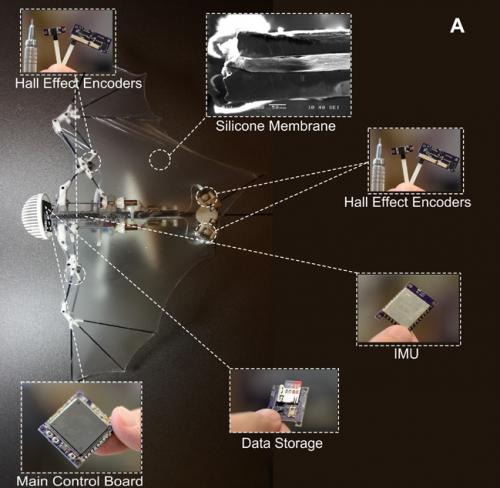 Схема строения дрона.