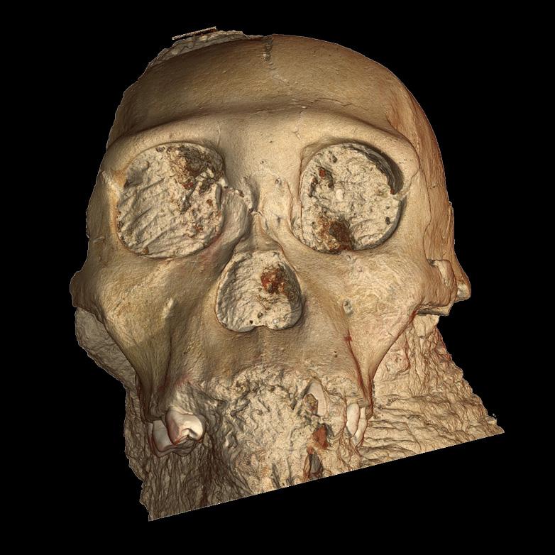 Прорисовка 3D-скана черепа Australopithecus sediba