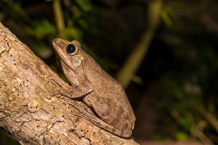 Зрение лягушек ижаб— особенное.