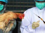 С октября прошлого года в Китае идет новая - самая масштабная за последнее время - эпидемия птичьего гриппа.