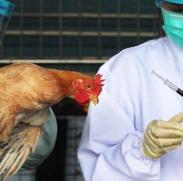 Обнаружена мутация, сделавшая птичий грипп опасным для людей